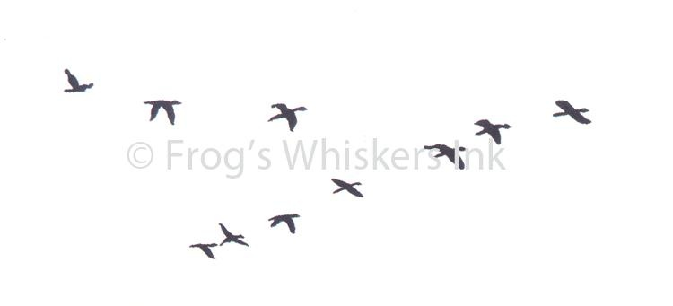 Frog's Whiskers Stamps - Flying Geese