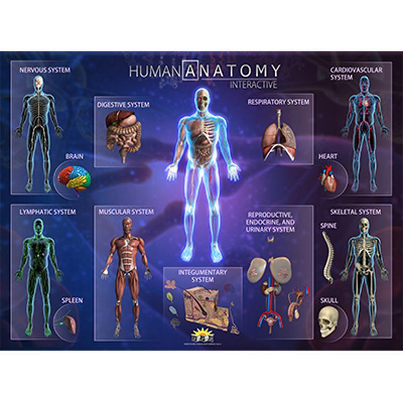 Human Anatomy Smart Mats Set Of 4